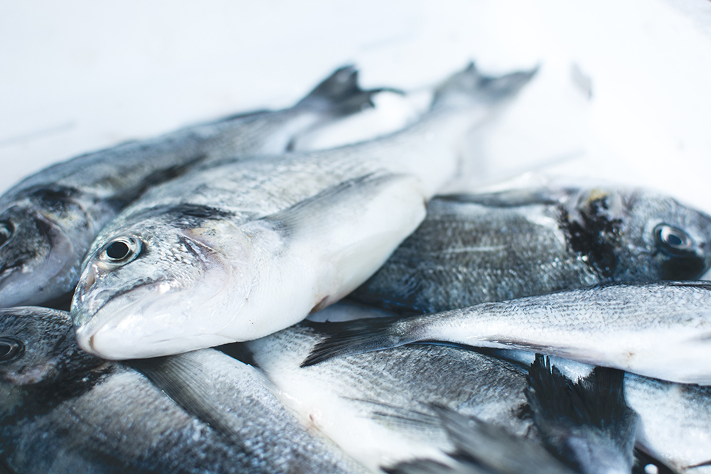Commercial Refrigeration | Fish