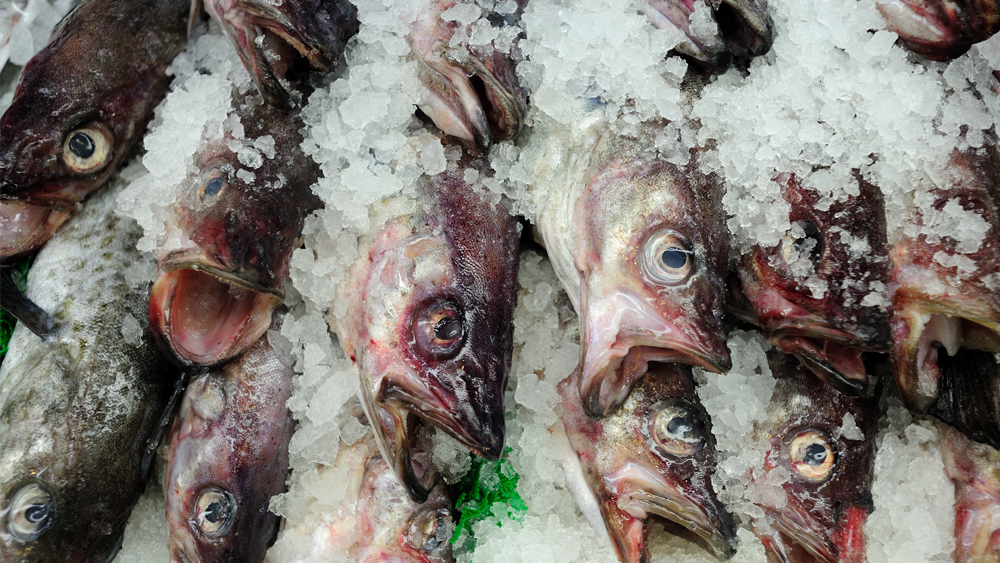 Fish and Seafood Refrigeration